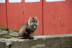 Barn cat sitting on old stone wall Stock Images