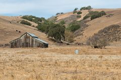 Barn. Cattle and barn along Pacheco Pass near Gilroy, California Royalty Free Stock Photography