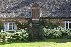 Barn conversion. Cotswold barn conversion with Hydrangea border, Warwickshire, England Royalty Free Stock Images