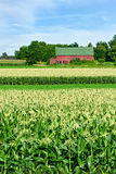 Barn and Cornfield Stock Image
