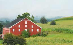 Barn in Countryside. Red barn on countryside hill of corn stalks Stock Photo