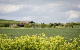 Barn in the Countryside Royalty Free Stock Photo