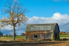 Barn in Disrepair. Abandoned Barn Beside Tree in Autumn Field Stock Image