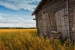 Barn Doors And Rye Field royalty free stock images