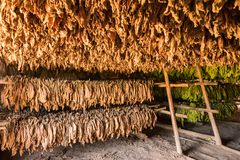Barn for drying tobacco leaves in the Vinales valley in Cubaa Stock Photos