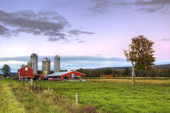 Barn at dusk with cows and grass in foreground. Barn and cellos at dusk with cows and grass in foreground and fall trees in the background royalty free stock image