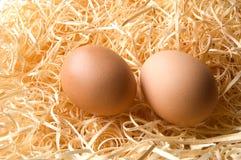 Barn Eggs Royalty Free Stock Photo