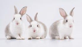 barn för kanin tre Fotografering för Bildbyråer