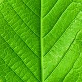 barn för leaffjäder Fotografering för Bildbyråer