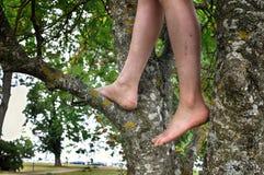 barn för tree för aktiv för pojkefilialbarn för klättring natur för skog male leka Royaltyfri Foto
