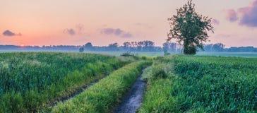 barn för vete för solnedgång för aftonfältgreen Arkivbilder