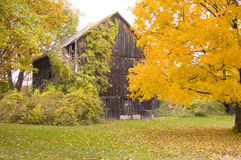 BArn in Fall. An old, weathered barn surrounded by fall colors Stock Photos