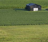 Barn in Field. This is an old tobacco barn in Northern Kentucky. It is in between a soybean and a tobacco field with grass in front. It has lots of copy space Stock Photography