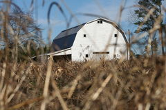 Barn in field. Old barn painted white in hay field Stock Photography
