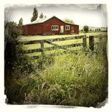 Barn in field Royalty Free Stock Photo