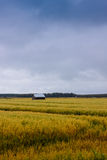 Barn On The Fields Of Gold Royalty Free Stock Photography