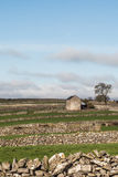 Barn in fields, portrait royalty free stock photo