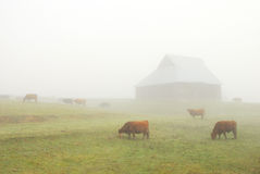 Barn in Fog Stock Images