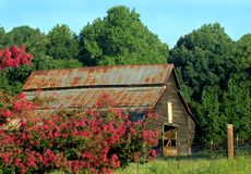 Barn framed by blooms