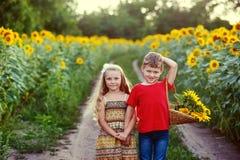 Barn går nära ett fält av solrosor Begreppet av children& x27; s-kamratskap Arkivfoto