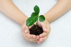 barn gömma i handflatan växt s Arkivbild