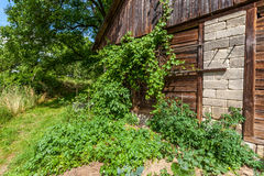 Barn with grapes Stock Photo