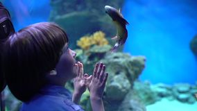 Barn hålla ögonen på för pys som ser fiskar i under-vattenakvarium i oceanarium Älsklings- shoppa Pojken ser fisksimning arkivfilmer