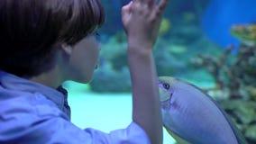 Barn hålla ögonen på för pys som ser fiskar i under-vattenakvarium i oceanarium Älsklings- shoppa Pojken ser fisksimning lager videofilmer