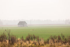 Barn on the harvested field. Stock Photography