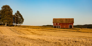 Barn in a harvested field. Nearby a group of birch trees, forest in the background Stock Photo