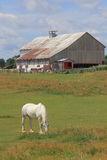 Barn and Horse Stock Images