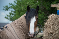 Barn horse stock photo