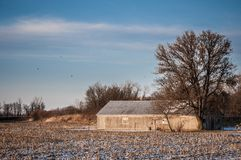 Barn house. On the corn field durinf winter royalty free stock photography