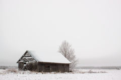 Barn House After Snow Storm. An abandoned barn house after snow fall. The wind blew the snow throug the wall structures royalty free stock images