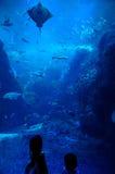 Barn i akvarium Arkivfoton