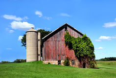 Barn and Ivy Cover Royalty Free Stock Photos
