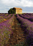 Barn in Lavender Field on the Plateau de Valensole Stock Photos