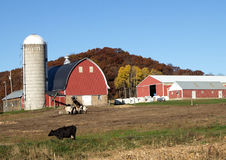 Barn and machine sheds. A red barn and machine sheds on a Wisconsin dairy farm Royalty Free Stock Image