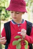 Barn med franch av körsbärsröd frukt arkivbild