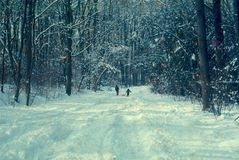 Barn med släden i snö royaltyfria foton