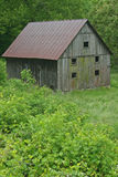 Barn with Mildew Stock Photos