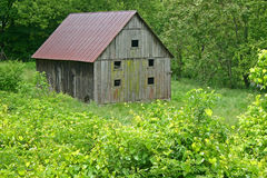 Barn with Mildew 3 Stock Images
