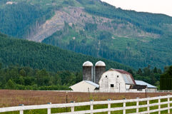Barn Nestled in Forested Mountains. Old weathered white wooden barn with red roof and two silos nestled in evergreen forested Cascade Mountains.  Patch of clear Royalty Free Stock Photo