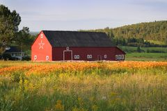 Barn in New Brunswick. Barn in rural New Brunswick, Canada at sunset royalty free stock photo