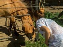 Barn och en häst Arkivbild