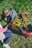 Barn och hög kvinna som inom sätter äpplen av royaltyfri bild