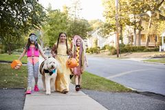 Barn och hund i allhelgonaaftondräkter för trick eller behandling arkivbilder
