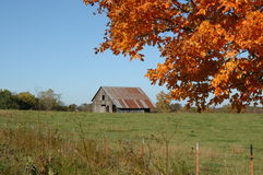 Barn Between Orange and Green. Rustic Barn sits in a field of green.  It is framed by the orange foilage of fall.  Blue skies complete this serene country scene Stock Image