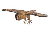 Barn Owl Bird Stock Photos
