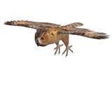 Barn Owl Bird Stock Photos